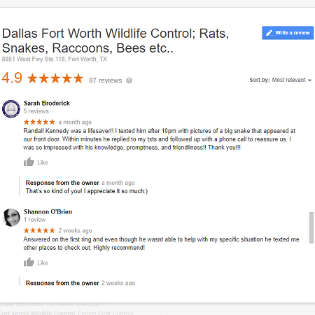 Google Business Reviews for a DFW Wildlife Control Company